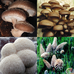 Gourmet Delight of Mushrooms Grow Kits